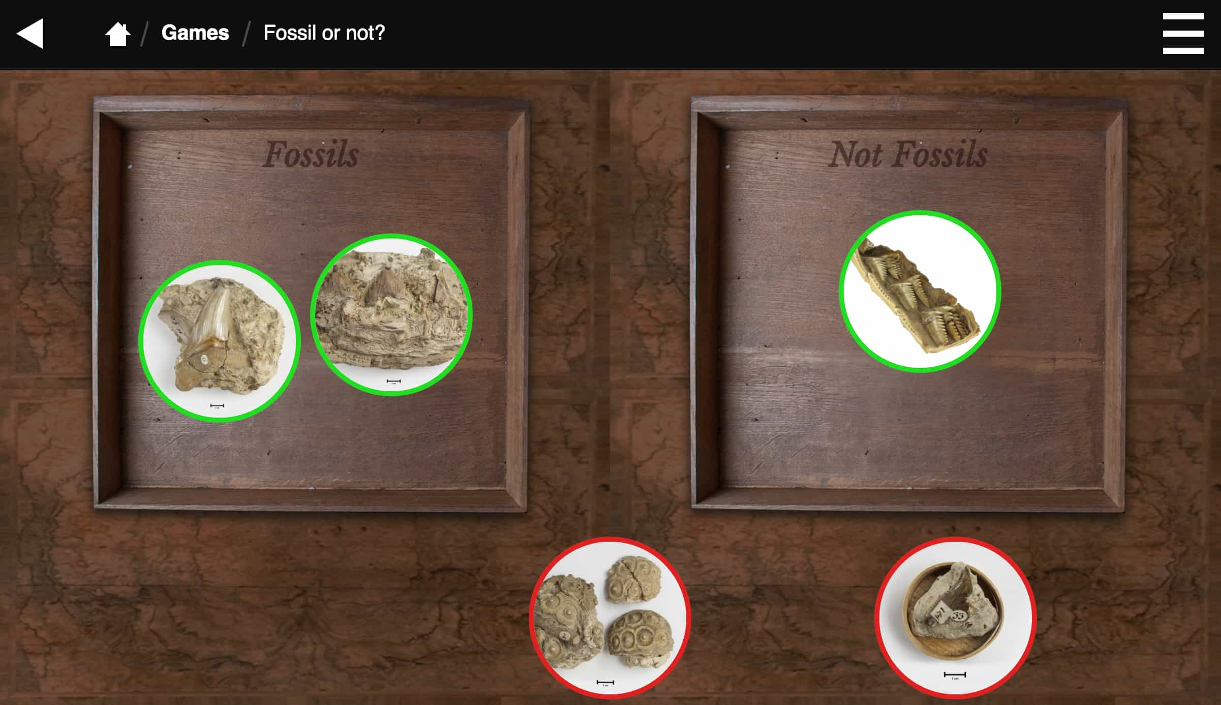 Fossil sorting game